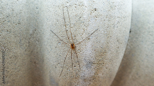 Creeping arachnid on the wall Wallpaper Mural