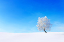 Alone Tree In The Snow On A Fi...