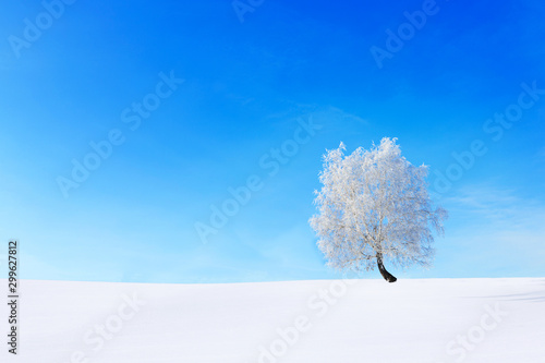alone-tree-in-the-snow-on-a-field-winter