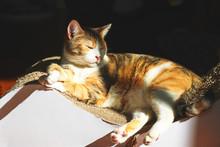 White And Orange Cat Sleeping ...