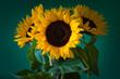 słoneczniki na zielonym tle