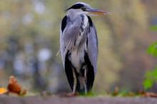 Portrait Herons