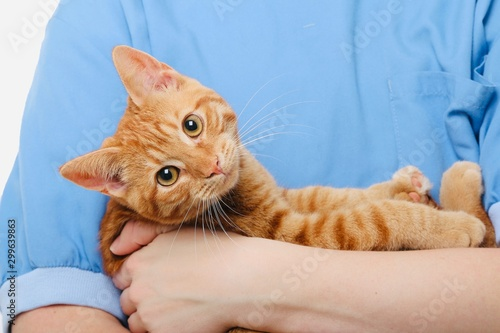 Tablou Canvas Person holding a beautiful lovely kitten