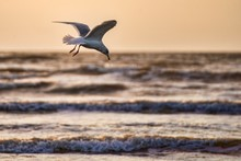 Closeup Of A White Seagull With Spread Wings Flying Above The Ocean