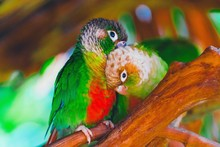 Colorful Parrot On Branch