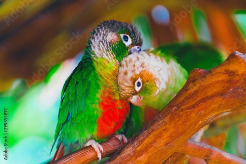 Fotografie, Obraz colorful parrot on branch