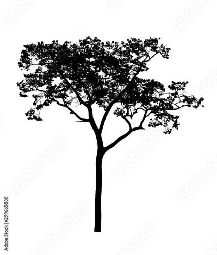 Silhouette of a tree isolated on white. - 299665880