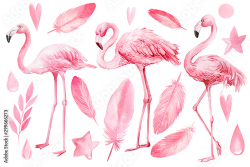 Spoed Foto op Canvas Flamingo set of elements on an isolated white background, flamingos, pink feathers, stars, hearts, drops, watercolor illustration, hand drawing