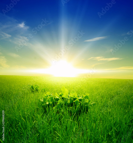 Photo Stands Green Nature Background