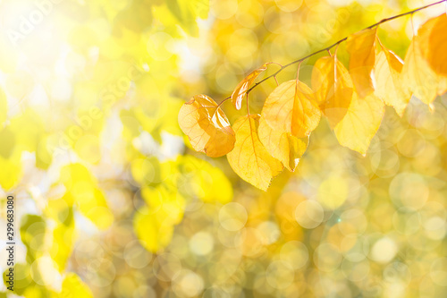 Foto auf Gartenposter Gelb Autumn branch with beech leaves decorate beautiful nature bokeh background copy space Place for text Hello autumn, september, october, november, nature concept Rustic style