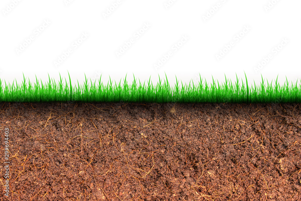 Fototapety, obrazy: Abstract image of Cross section brown soil and green grass in underground.