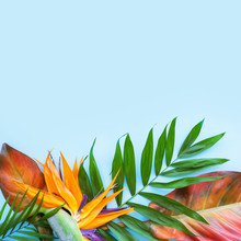 Background Of Tropical Flowers, Strelitzia And Palm Leaves, Bouquet Of Exotic Plants. Place For Text. Flat Lay. Summer Concept.