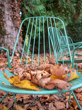 Lounge Chair In Forest Covert With Fall Leaves