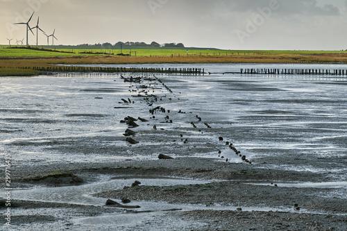 Fotografie, Obraz Ebbe im Wattenmeer. Ostfriesland