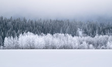 Winter Wonderland Forest: Ever...