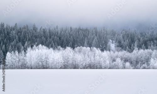 Winter Wonderland Forest: Evergreen Trees on Snow-covered Hillside - Washington, Canvas Print