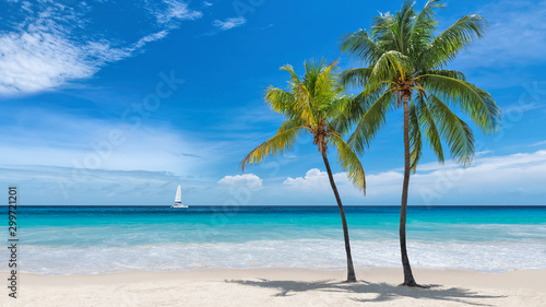 Paradise beach with palm trees and sailboat in tropical sea in Key West, Florida - 299721201