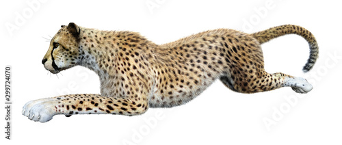 3D Rendering Big Cat Cheetah on White Wallpaper Mural