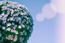 Bush Of Flowers On Blue Sky