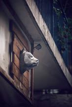 Bear Head On Wall