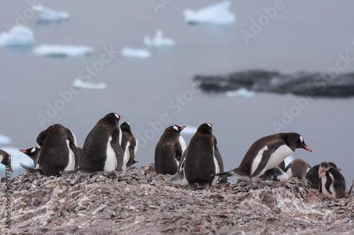 Spoed Fotobehang Pinguin manchots papou