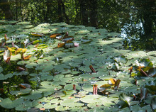 Small Forest Lake Or Pond With...