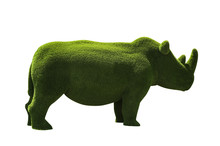 Beautiful Rhinoceros Shaped Topiary Isolated On White. Landscape Gardening