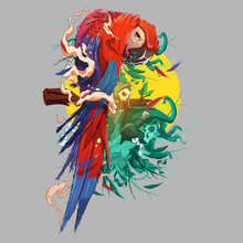 Colorful Parrot Vector (Ai, EP...