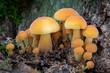 canvas print picture - Closeup shot of edible mushrooms known as Enokitake