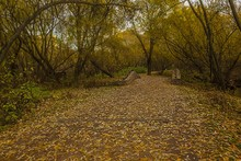 Pathway Covered In Brown And Y...