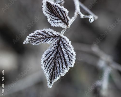 Fototapety, obrazy: frost on the tree
