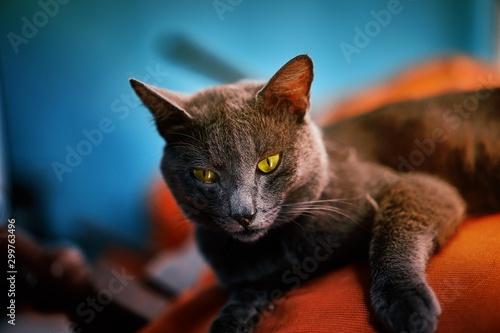 Foto auf Leinwand Katze kat cat
