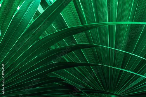 Fototapete - tropical palm leaf and shadow, abstract natural green background, dark blue tone