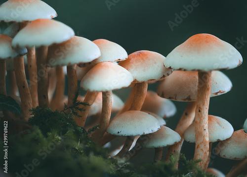 Fotografie, Obraz  Pilz