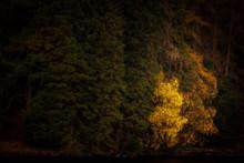 Morning Light At Tarn Hows In ...
