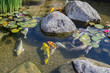 canvas print picture - Decorative fishes in pond