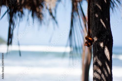 foto con fondo de playa perfecta para anuncios de verano Canvas Print