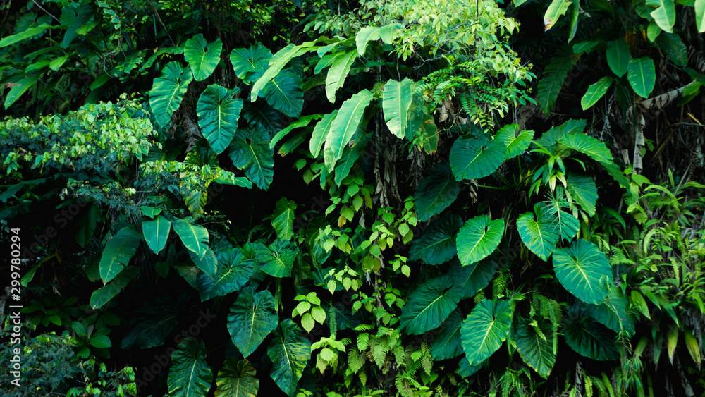 Fototapety, obrazy: Detail of tropical forest on Guadeloupe.