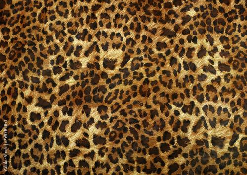 Fotografering leopard skin texture