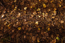 Dry Yellow And Crumpled Leaves, Dry Pine Needles In A Ray Of The Sun On The Ground On An Autumn Day. View From Above