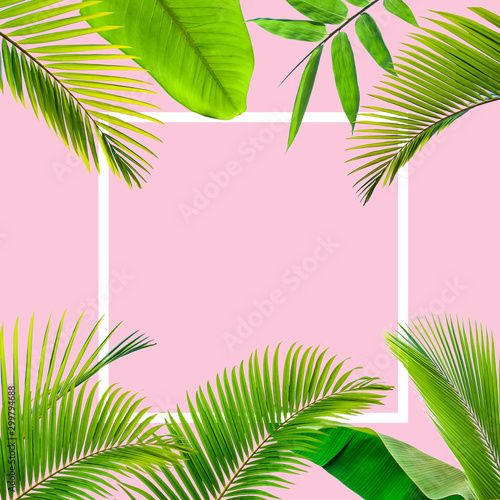 Natural palm leaf with white frame on pastel pink background, nature background