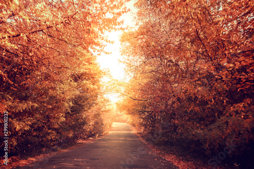 Foto auf Gartenposter Ziegel Country road on an autumn sunny day. Nature landscape. Trees grow along the road
