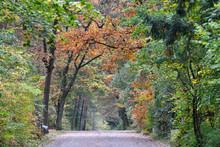 Herbst Auf Dem Waldfriedhof Ma...