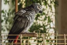 Parrot Jacko Sitting On The Pe...