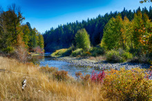 Fall Colors Of Trees Along A S...