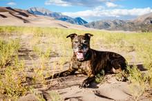 Dog On Sand Dunes
