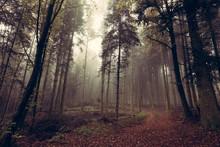 Un Chemin Forestier Couvert De...