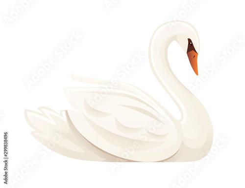 Stampa su Tela White swan largest flying bird swim on water cartoon animal design flat vector i