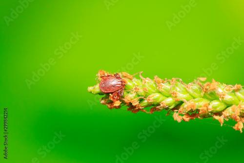 Photo ticks on plant