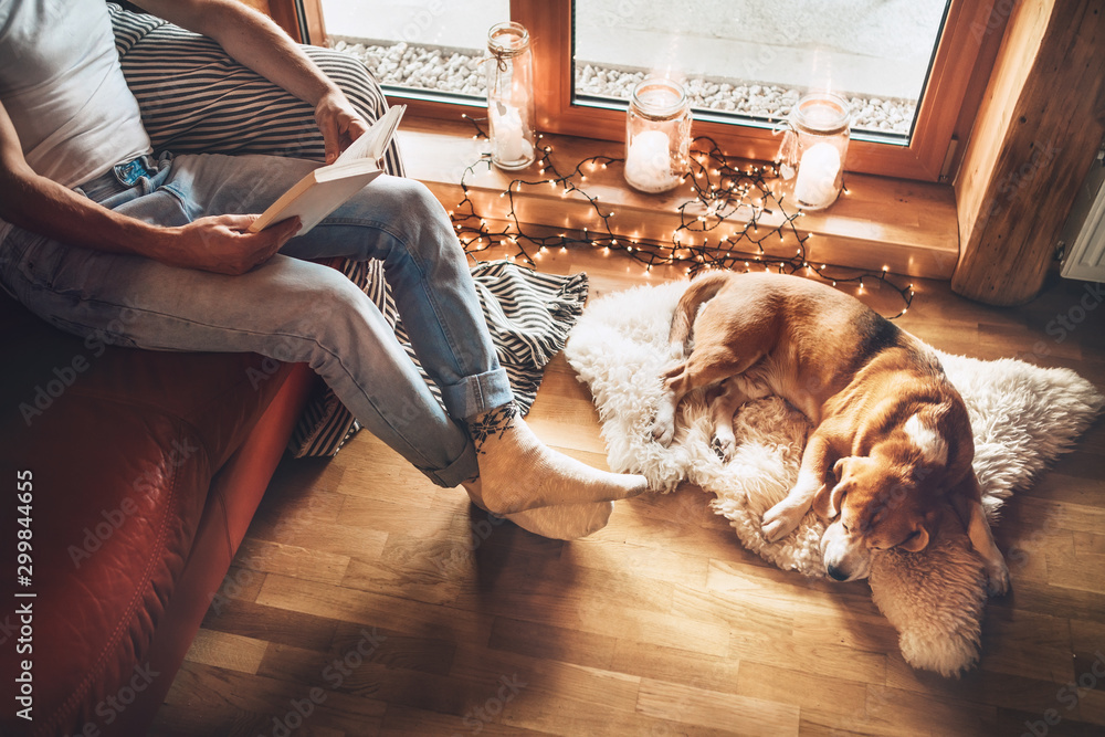 Fototapety, obrazy: Man reading book on the cozy couch near slipping his beagle dog on sheepskin in cozy home atmosphere. Peaceful moments of cozy home concept image.
